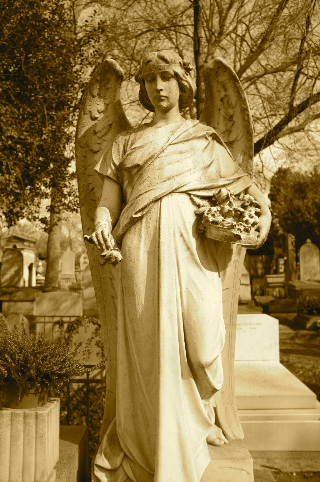 The angel of the cemetery